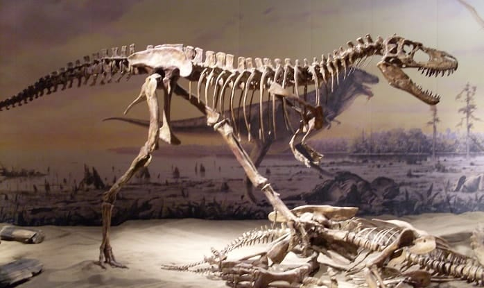 Albertosaurus Exhibition at the Royal Tyrrell Museum