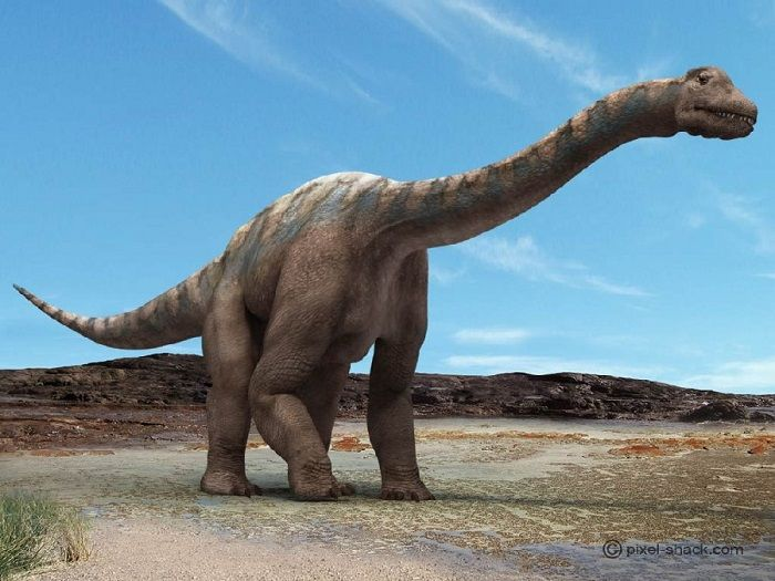 Argentinosaurus had a long neck