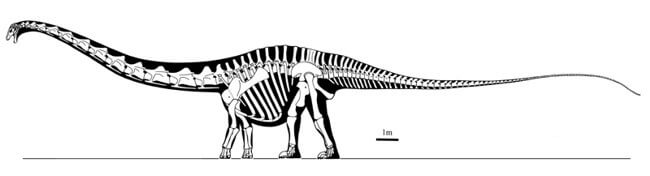 Supersaurus Description