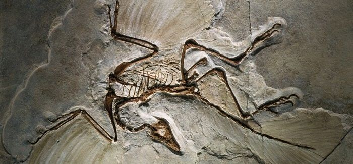 Discovery of Archaeopteryx
