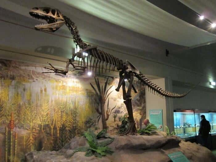 Discovery of Megalosaurus