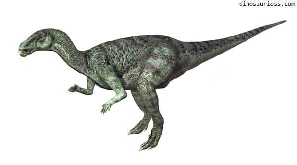 Camptosaurus - Flexible Lizard