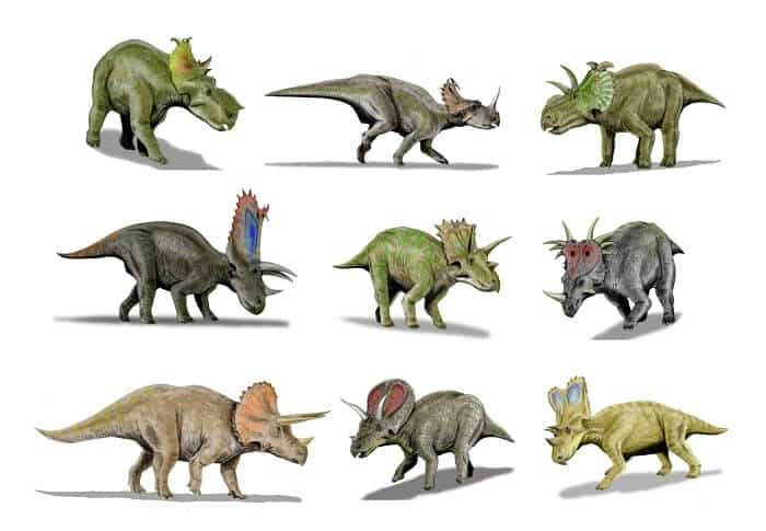 Ceratopside Family