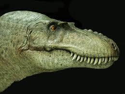 gorgosaurus - head