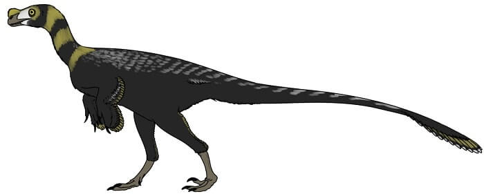 History of Ornitholestes
